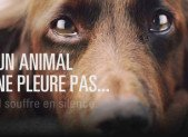 [INFO PREVENTION] La maltraitance sur un animal
