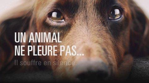 Maltraitance animaux